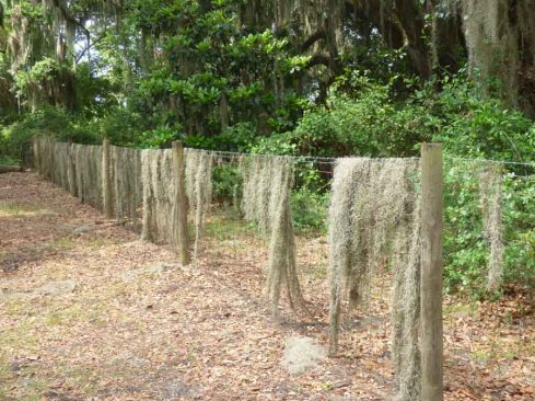 b Spanish Moss on Fence