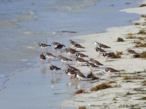 f Birds on Shore