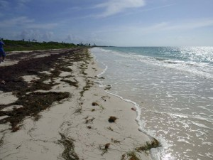 f Grass Sand Water