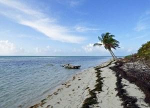 f Palm Tree on Beach