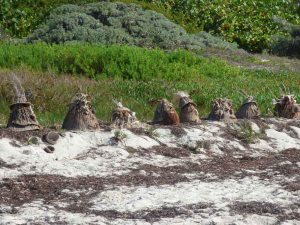 f Row of Sponge Heads