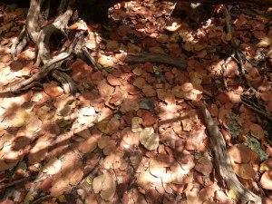 f Seagrape Leaf Carpet