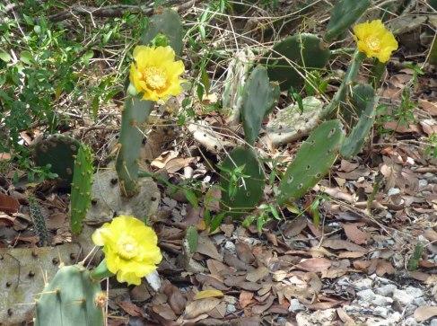 s Cactus Blooms