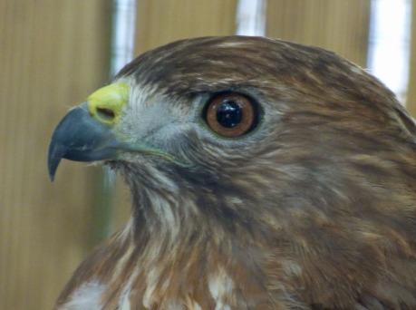 s Hawk Eye