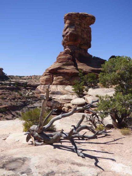 b Dead Tree and Tall Rock