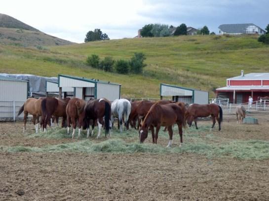 b Horses