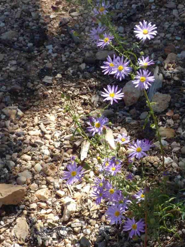 b Purple Flowers