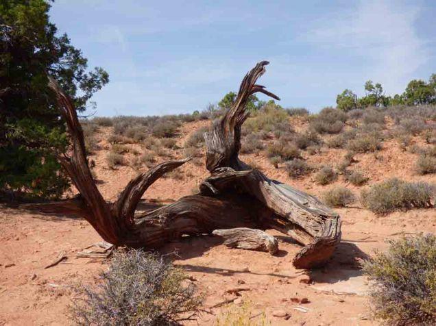 b01 Dead Tree