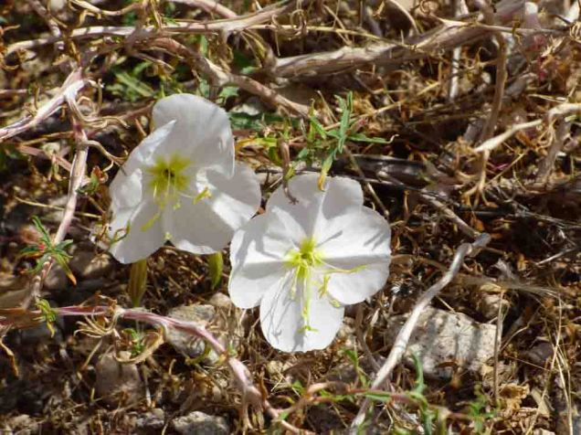 b07 White Flowers