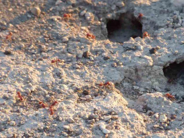 b3 Ant Hill Closeup