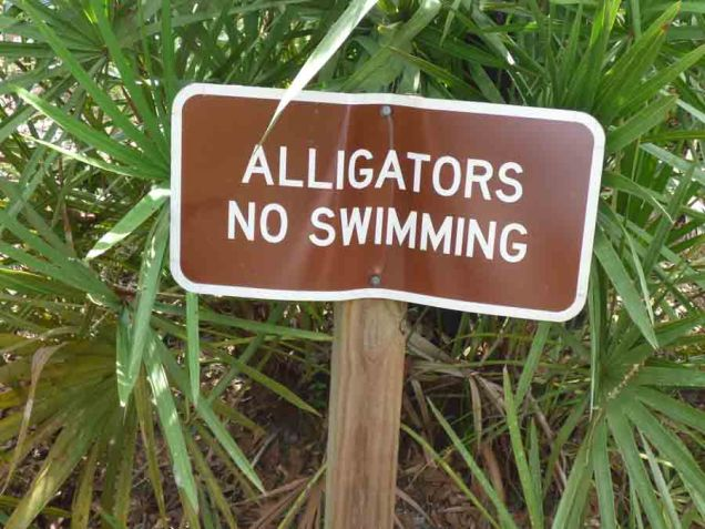 b Alligator Sign