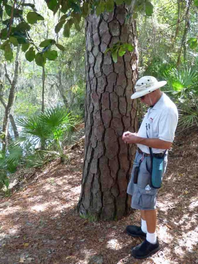b Andy nex to Big Pine Tree