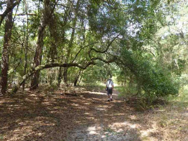 b Andy Walking Under Bent Tree