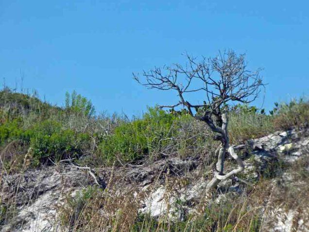 b Dead Tree on Dune