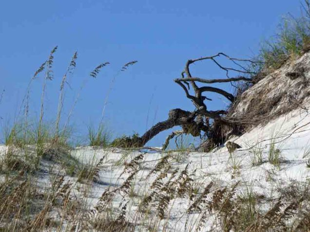 b Giant Spider on Dune