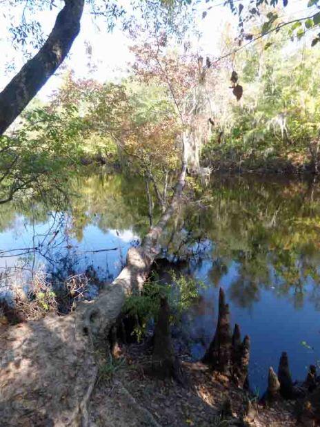 b Horizontal Tree Over River
