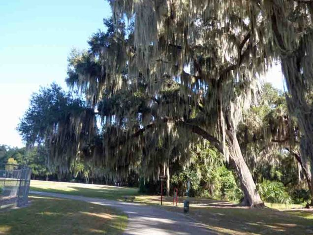 b Live Oak and Spanish Moss
