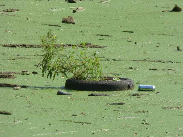 b Plant Growing in Floating Tire