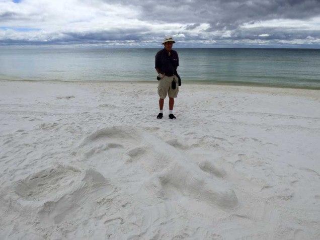 b Sand Alligator on Beach