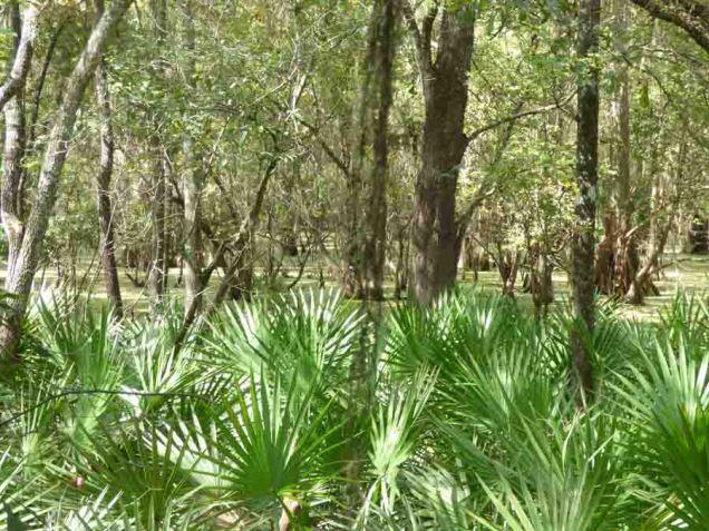 b Swamp