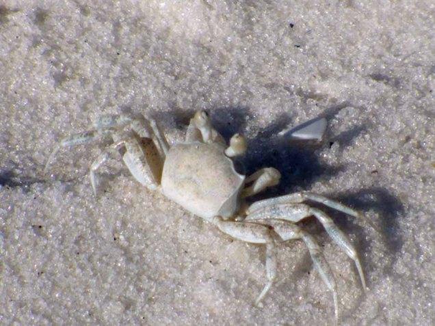 b Tiney Crab