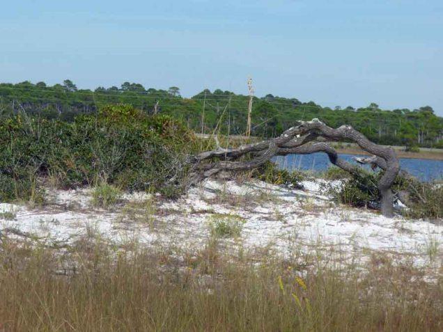 b Tree Lying Down