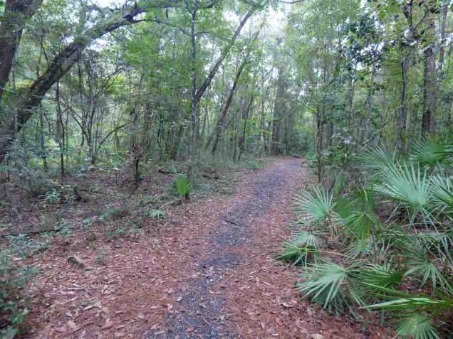 b02 Path Along Creek