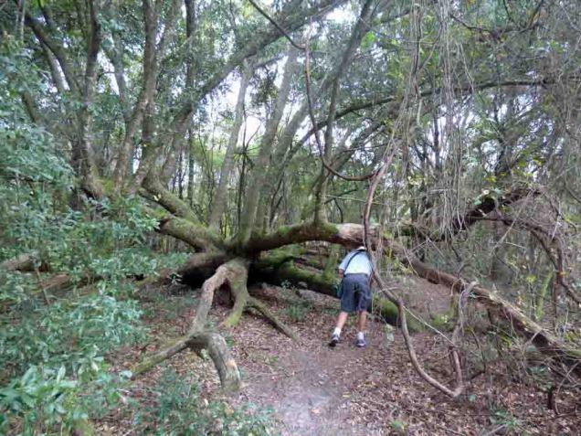 b06 Splayed Tree