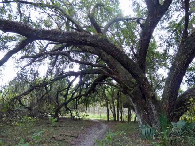 b09 Trail Under Trees