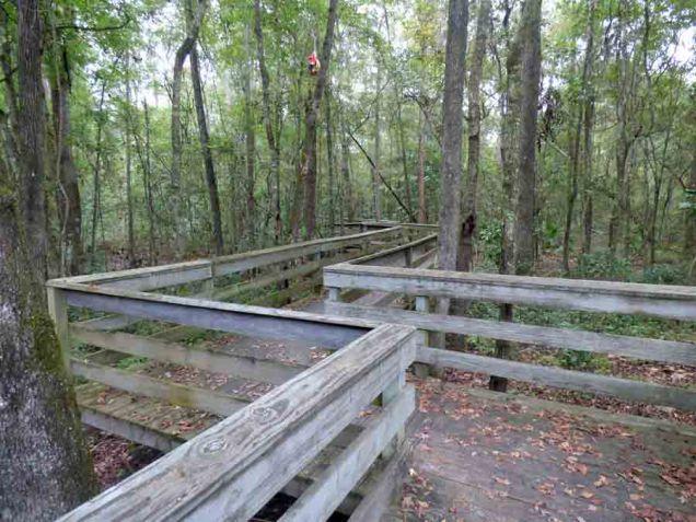 b1 Zig Zag Boardwalk Through Woods
