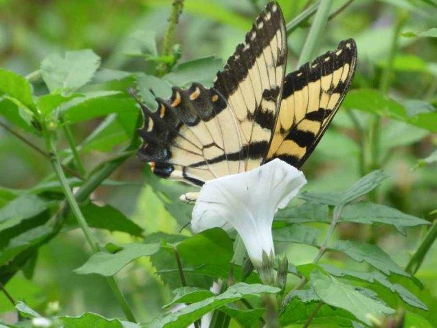 b11 Butterfly in Flower