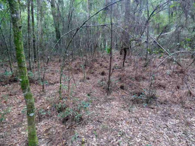 b12 Pine Needles Cover Forest Floor