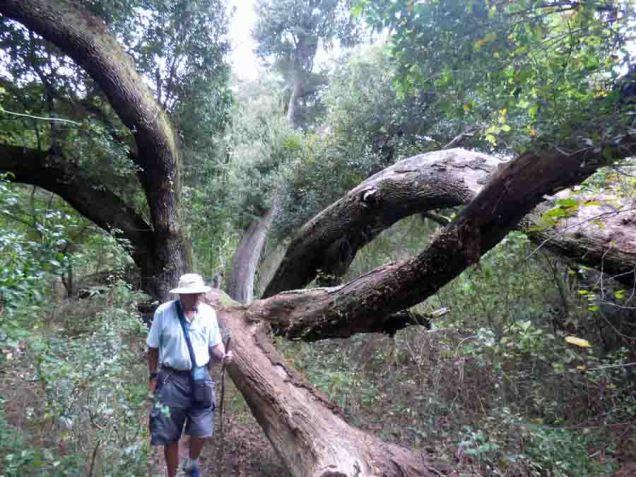 b19 Splayed Trees