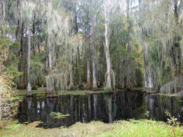 b23 Swamp