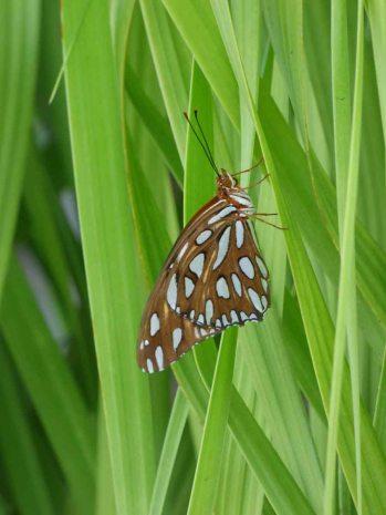 b Butterfly on Tree