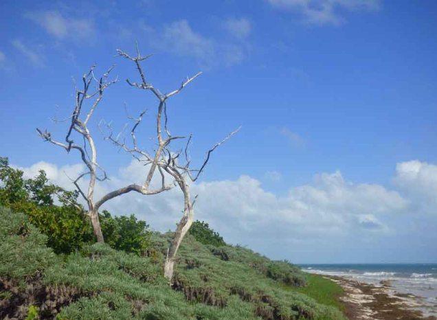 b Dead Trees on Beach