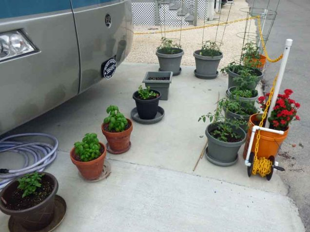 b Garden is Growing