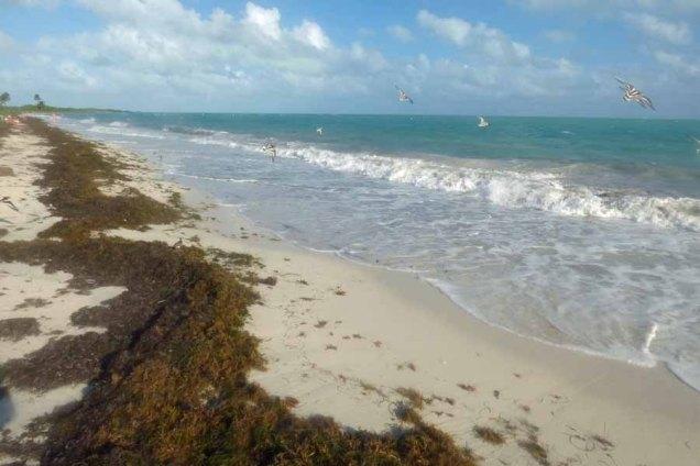 b Grass on Beach