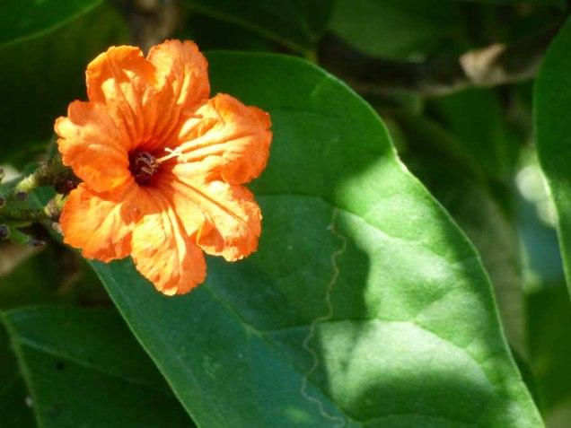 b Orange Flower