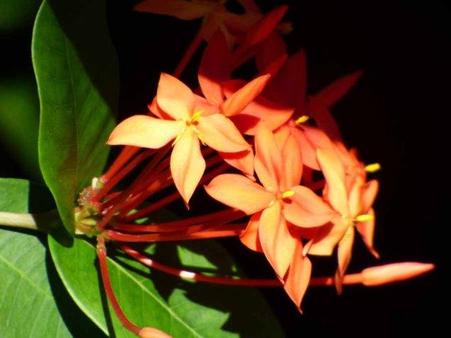 b Orange Flowers