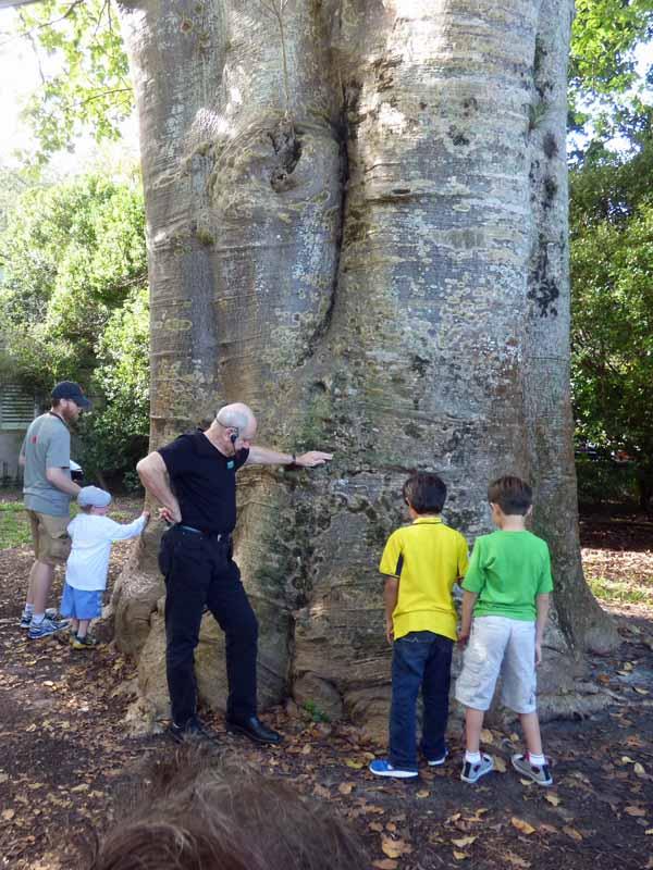 b10 Boabab Tree