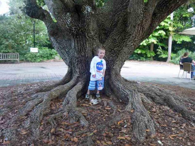 b15 Owen in Front of Tree