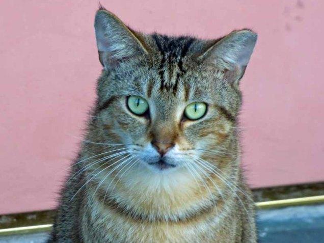 b Cat 1