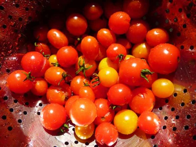 b Closeup of Tomatoes in Colander