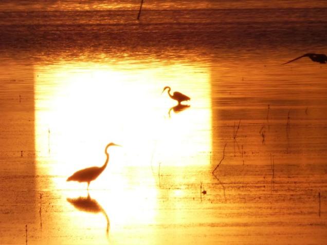 b03 Birds in Sun Streak