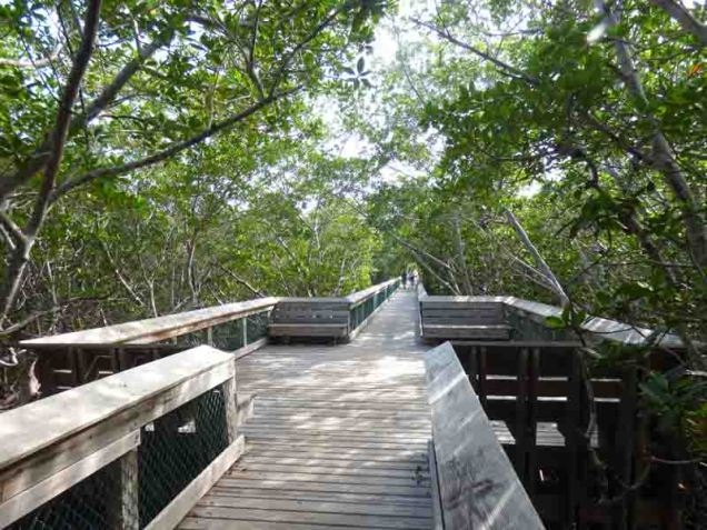 b Boardwalk at Long Key State Park