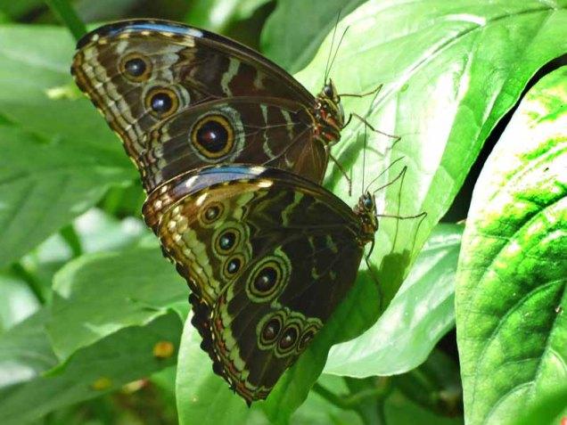 b Butterflies