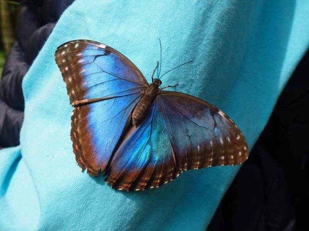b Butterfly on Martin's Sleeve