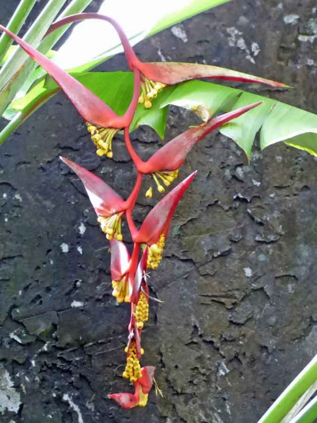 b Exoctic Red Flower