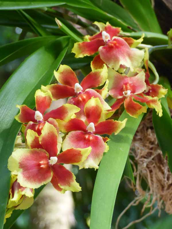 b Orange and Yellow Orchids